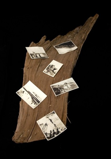 Six Dunkirk Phossils on driftwood by Charlie Bonallack